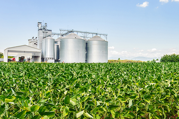 Article image for Farm safety: Grain storage and transport