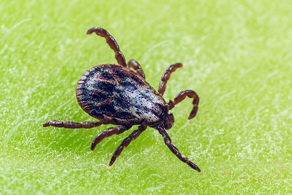 How to halt ticks and detect Lyme disease