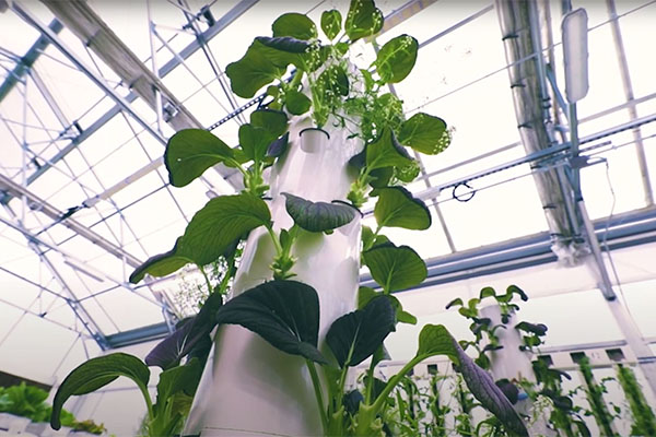 Tower garden basics